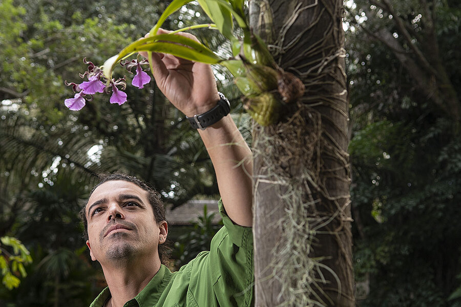 The orchid whisperers: Rare blooms find an urban perch