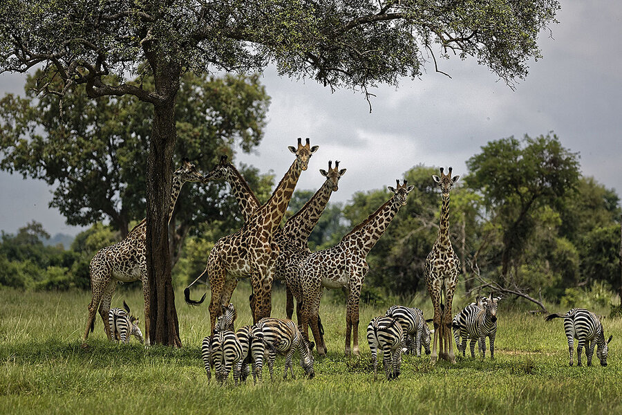 So 1 million species are at risk of extinction. Now what?