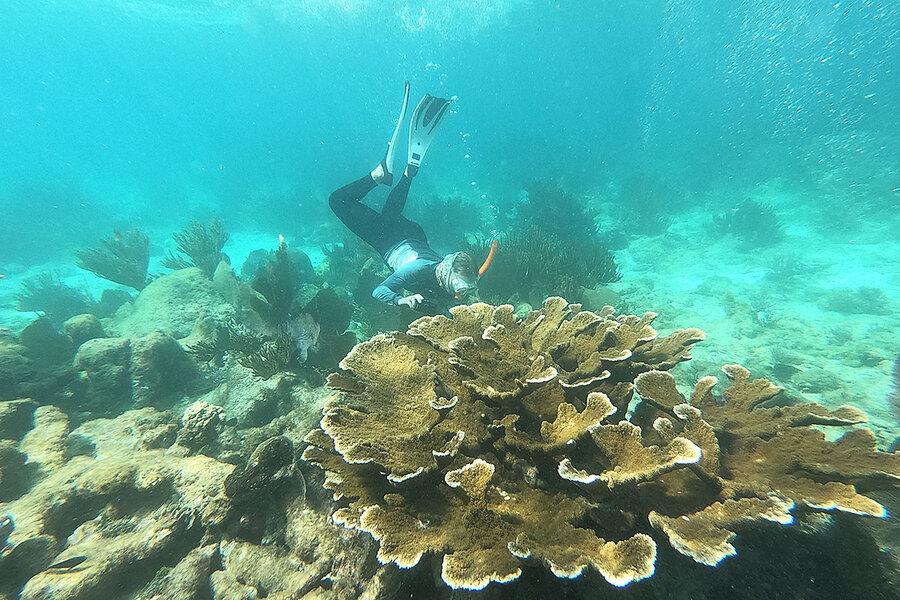Reef restored: How Belize saved its beloved coral