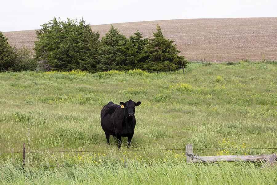 Habitat meets profit as ranchers restore native prairies