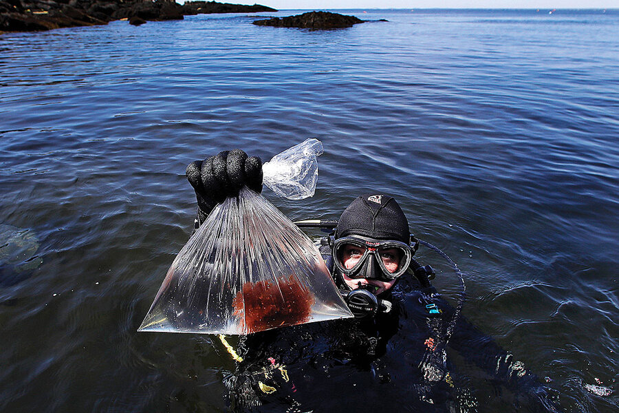 Good for business and nature, kelp grows on Maine fishermen