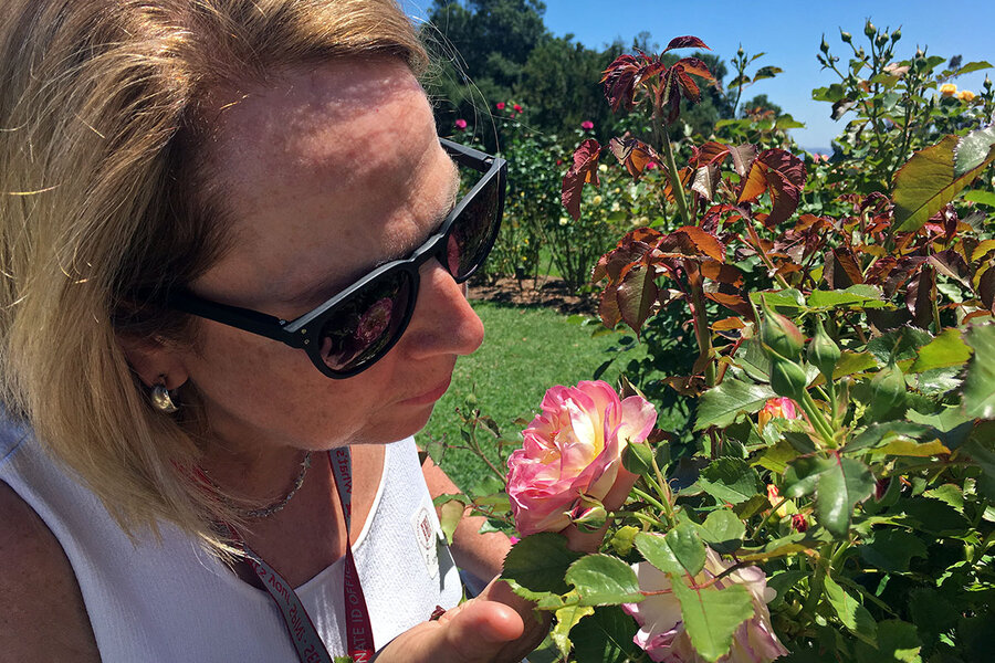 Huntington Library In California Celebrates 100 Years With A Rose