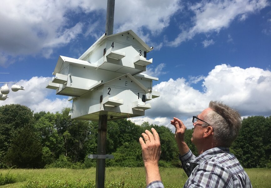 Human landlords, avian tenants: How purple martins survive