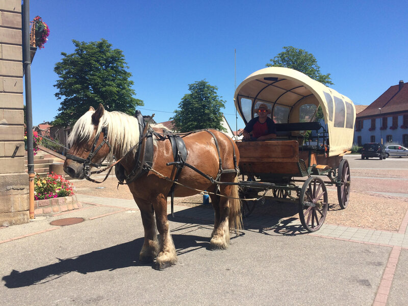 A school bus with hoofs: How one town embraces sustainability