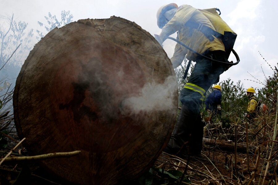 Amazon fires: G7 leaders offer to help restore the forest