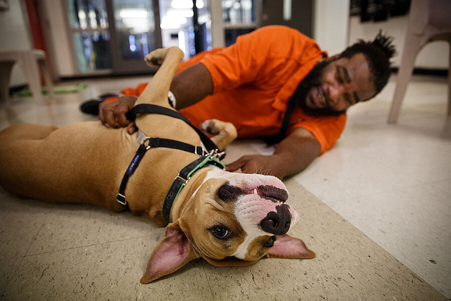 These dogs get second chances. Just like their inmate caretakers.