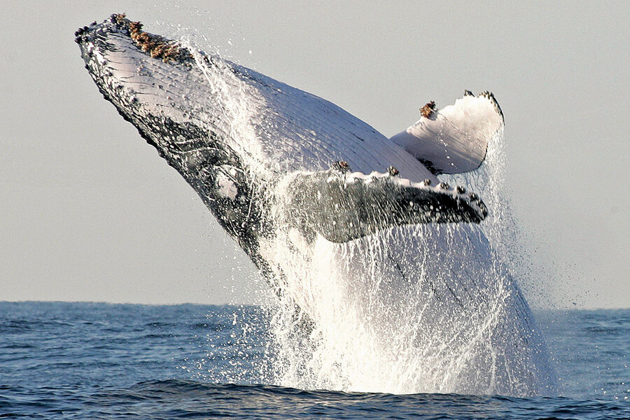 Points of Progress: Humpback whale populations rebound, and more