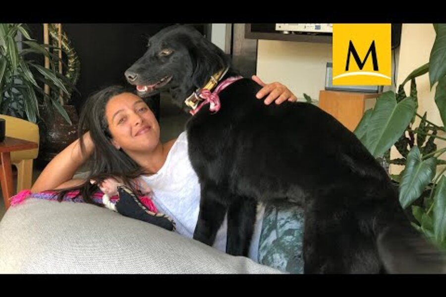 Puppy Love Corgis Join Latest Most Popular American Dog Rankings Csmonitor Com