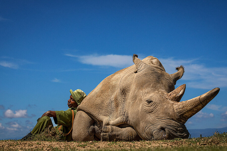 In Pictures: Inside the quest to save Kenya's northern white rhinos