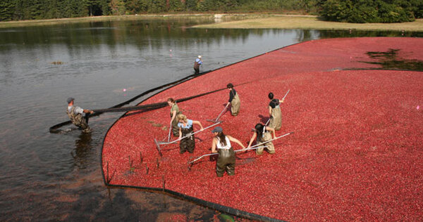 Cranberries are headed north