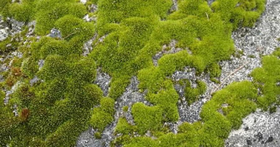 Grow Moss On Purpose Csmonitor Com