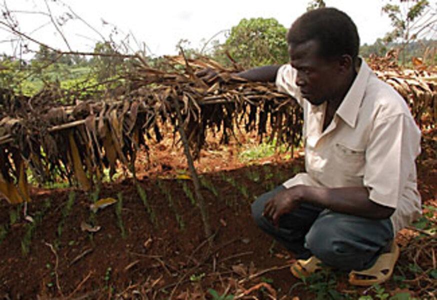 How A Kenyan Village Tripled Its Corn Harvest