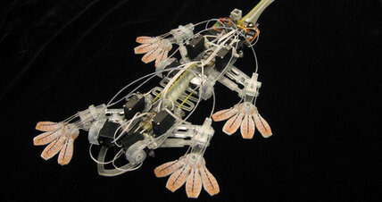 Nature-inspired robots swim, crawl, and scuttle like animals