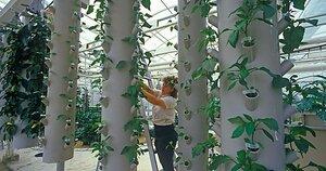 Video hydroponic gardening at Disneys Epcot Center CSMonitorcom