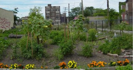 Growing green in Detroit