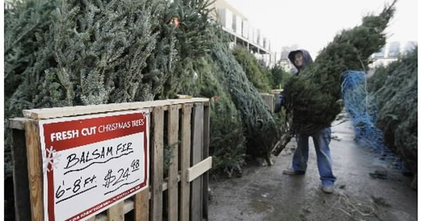Tis The Season For Christmas Trees CSMonitor Com - Christmas Trees In Home Depot