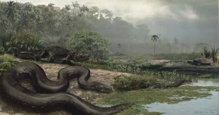 Prehistoric one-ton 'super snake' ate alligators for lunch