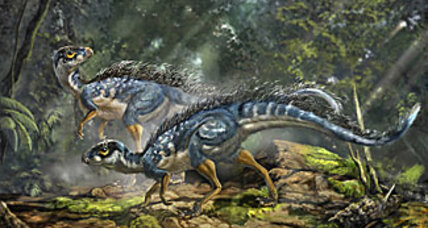 Feathery find could rewrite dinosaur history