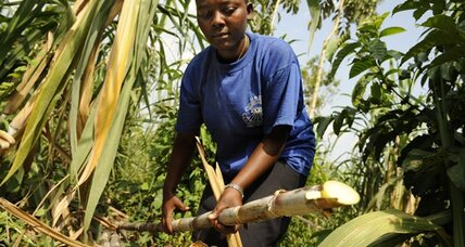 Uganda: How a teenage sugar cane farmer lifted her family out of poverty.