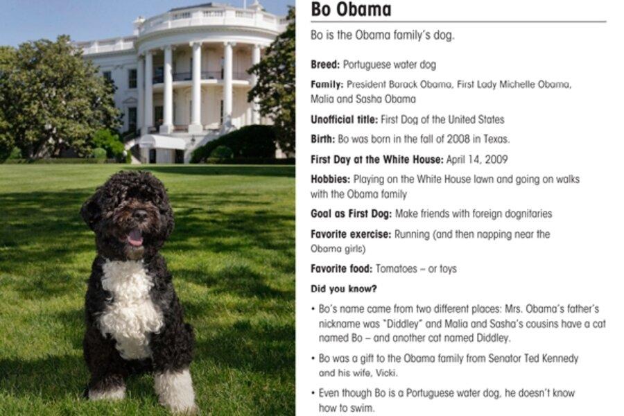 Breaking News President S Dog Photographed Scandal