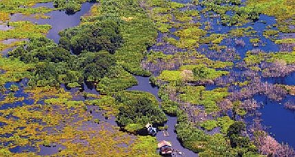 Earth Talk: Peat bogs – ecosystems that store C02