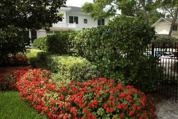 Inexpensive Landscaping Shrubs : Shrubs an inexpensive landscaping option csmonitor