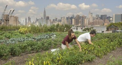 Rooftop gardens grow among the skyscrapers