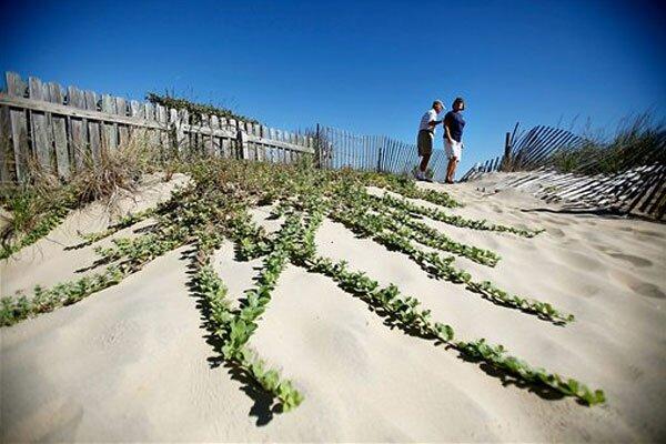 All Invasive Species In Virginia Beach