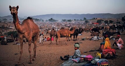 India: 20,000 camels, thousands of cows, and one chaotic carnival