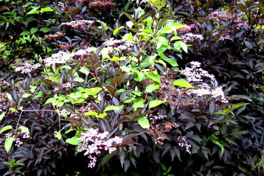 A Bird Friendly Garden Needs Good Shrubs Csmonitor Com