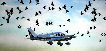 After US Airways 'miracle on the Hudson,' concern grows about bird strikes