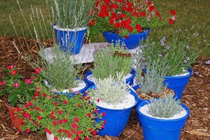 Christian Science Monitor & With these tips anyone can grow lavender - CSMonitor.com