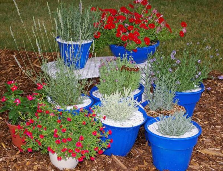 With These Tips Anyone Can Grow Lavender Csmonitor Com