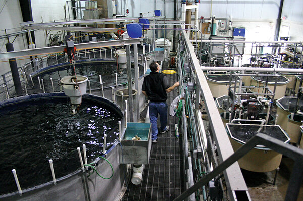Recirculating aquaculture systems the future of fish for Virginia fish hatchery
