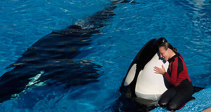 Death of Sea World trainer: Do 'killer whales' belong in theme parks?