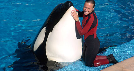 Sea World tragedy: How common are 'killer whale' attacks?