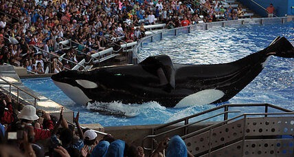 SeaWorld 'killer whale' incident gives parents pause