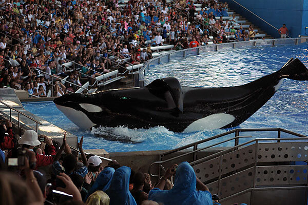 SeaWorld 'killer whale' incident gives parents pause ...