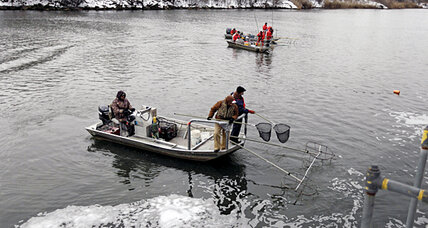 Asian carp invasion is a real problem