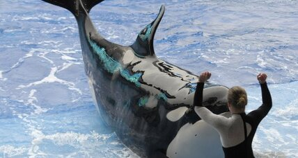 SeaWorld resumes shows with killer whales – but no 'Tilikum'