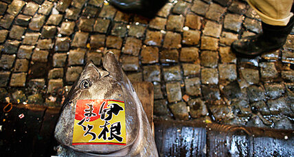 Japan win on bluefin tuna showed deft hand at CITES endangered species meeting