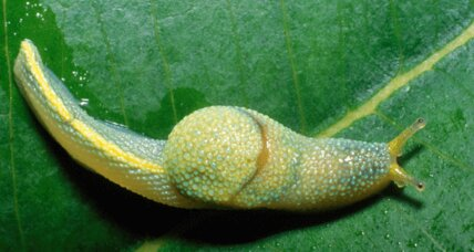 Wow! Ninja slugs, color-changing frogs and other weird new species discovered