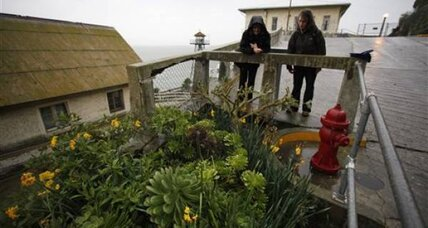 The rocky shores of Alcatraz bloom once again