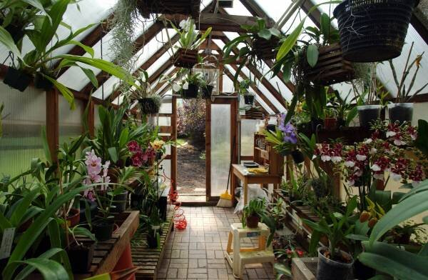 Grow Plants Year Round With A Greenhouse Csmonitor Com