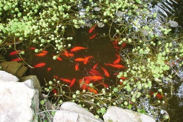 Great Ponds And Other Good Water Gardening Ideas