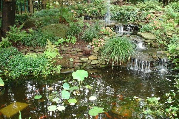 Great ponds and other good water gardening ideas for Build your own fish pond