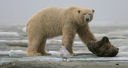 Arctic drilling opponents gain momentum from Gulf oil spill