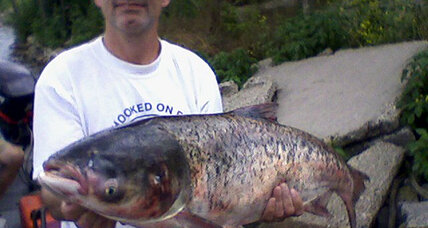 Asian carp caught near Lake Michigan: 'Carp wars' just got hotter
