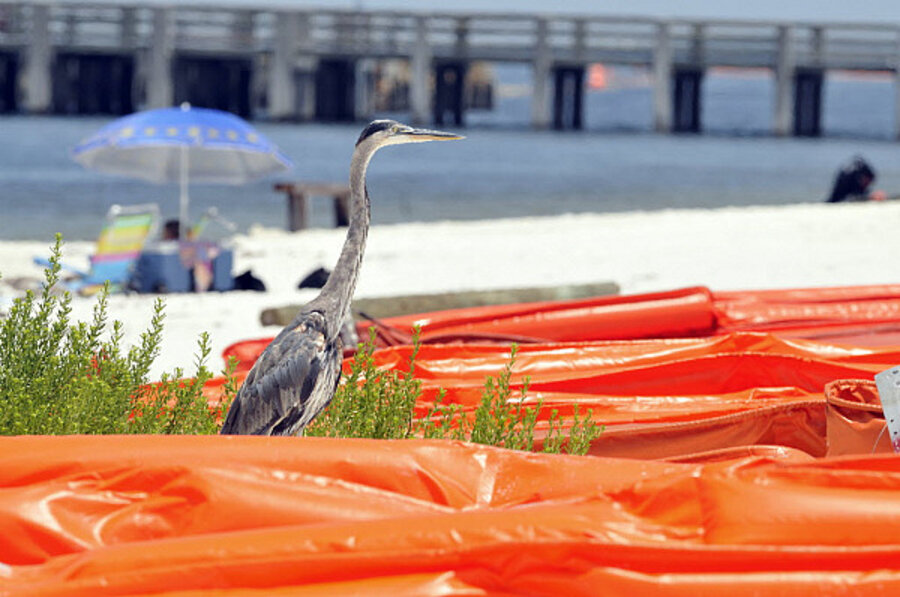 Gulf oil spill: What's the impact on national parks