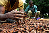 Will sky-high cocoa prices lift West African farmers?
